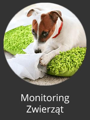kamera do monitoringu zwierząt w domu orllo.pl
