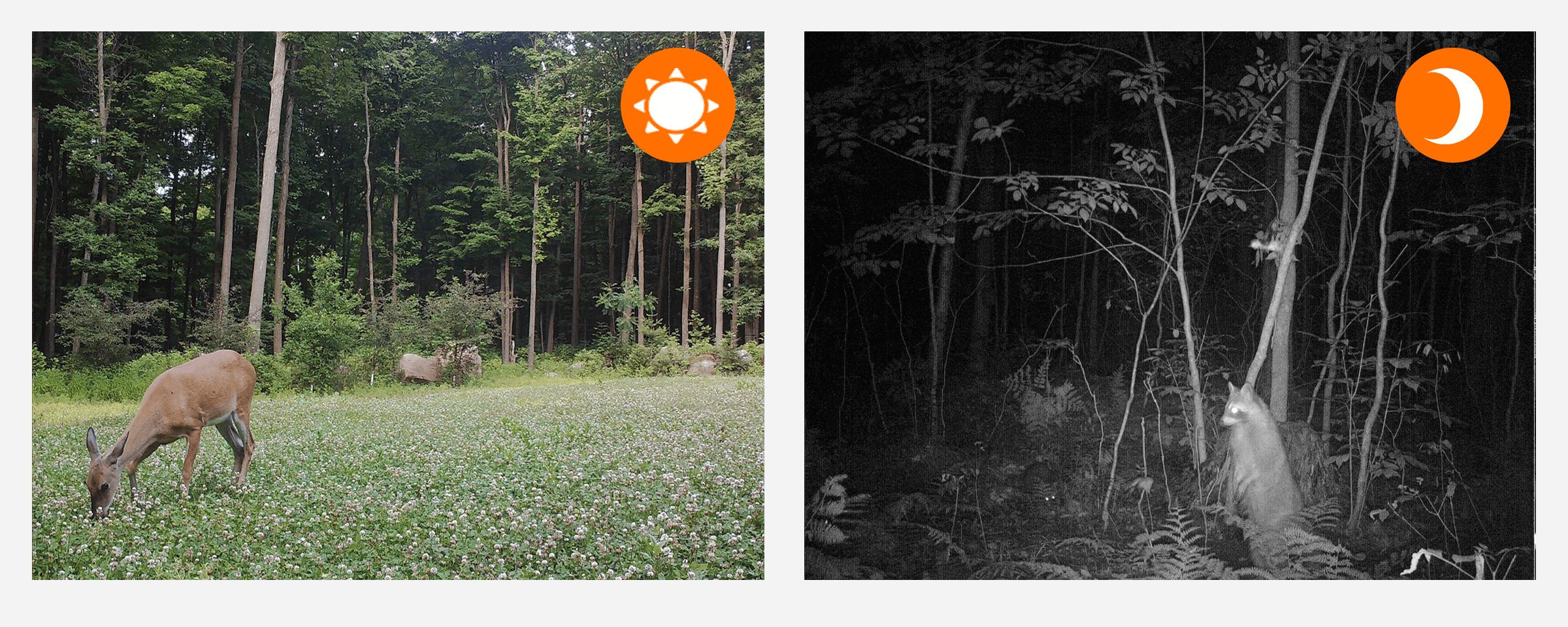 kamera na karte sim  orllo.pl